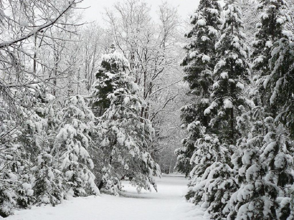 Kerstbomenwandeling