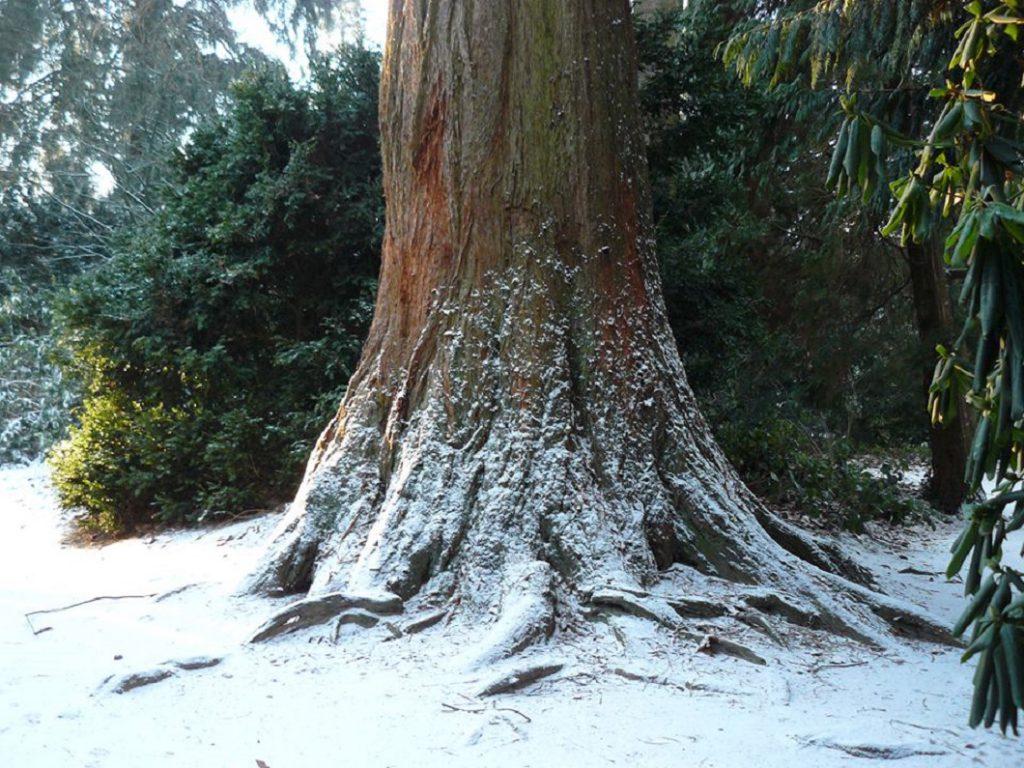 Mammoet sneeuw kerstbomenwandeling
